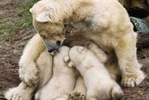 Animals Breastfeeding / by Kate Gulbransen