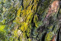 ecorce arbre