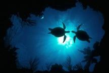 Sea Turtles / by SC C