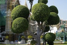Beautiful Topiary / Topiary is one of my favourite gardening subjects.