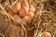 Egg Facts & Info