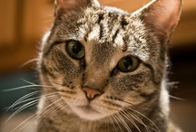 Cute Cats and Kittens / Pictures of cute cats and kittens / by Cute Cats
