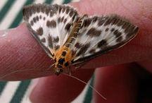 Butterfly/vlinders