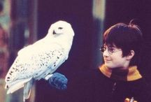 Harry Potter☇