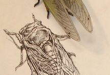 Dibujo científico y anatómico