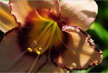 Les insolites des maisons d'hôtes Fleurs de Soleil
