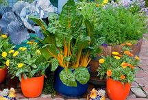 Pot plant veggies