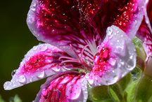 Raindrops and Rainy Days / by Linda Noel