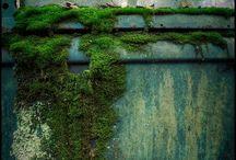 Everything Moss!