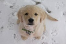 Snow / I love the snow