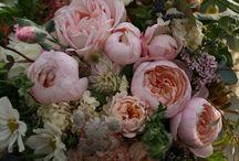 květiny/zátiší