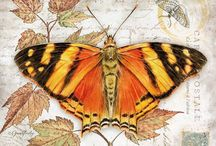 printables butterfly