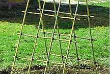 Salatalık çiti