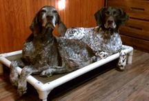 German Shorthaired Pointer / Celebrating German shorthaired pointers  / by Kuranda Dog Beds