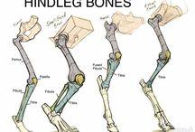 Скелет (Анатомия)
