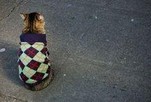 MISC: Kitties