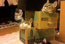 Cat Funnies
