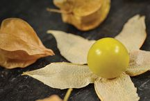 Fruit of the world