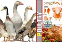 Poultry -Types & Cooking