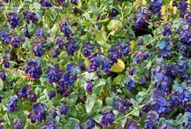 Plants to consider for 2017