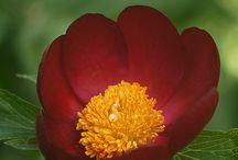 Λίγο απο το άρωμα των λουλουδιών