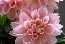 virágok - flower