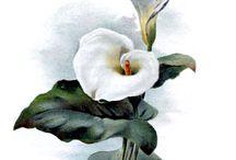 rajz 11