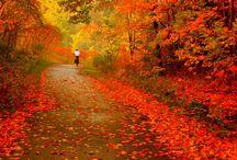 Цвета Польши/ Colours of Poland / все цвета все сезоны/ all colours all seasons