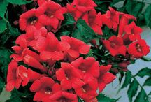 flower arrangements / by maryellen hodson