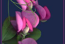 Flower, flower