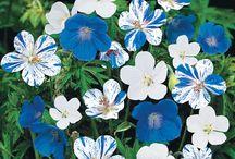 Perennial favourites