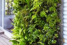 Sustainable Gardening / by Gardening Gals