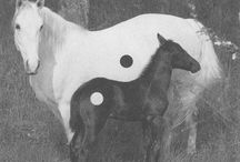 UNI : Yin and Yang concept