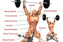 Olympic Weightlifting Infographics