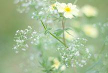nature // wildflowers.