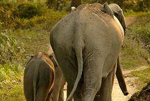Majestic animals / by Heather Maxfield