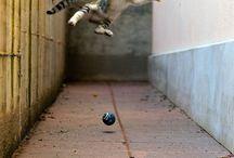 acrobat cat ...