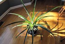 Container Plants & Indoor Plants