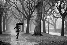 The art of rain / by T W