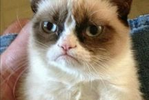 Grumpy old cat