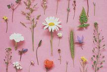 zielnik - florystyka