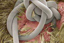 Biology : SEM images