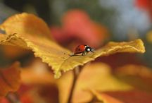 Lady bug, lady bug, fly away home....... / by Robin Kauffman