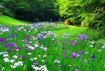 Gardens / Сады