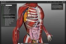 cos humà