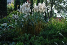 Gardens and garden plants