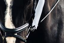 ♥ Horses