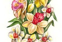 Transfer - flower