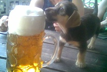 Dachhunds