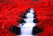 LEt's PaiNt tHe ToWn REd / by Angie Barnett